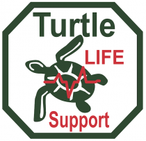 Turtle first aid certificate